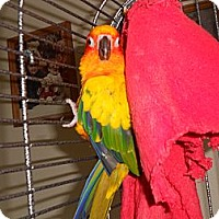 Adopt A Pet :: Woody - Neenah, WI