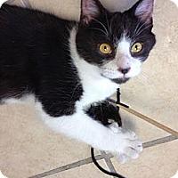 Adopt A Pet :: Spike - Byron Center, MI