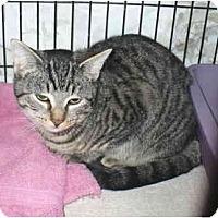 Adopt A Pet :: Edward - Colmar, PA