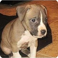 Adopt A Pet :: Jamie - Reisterstown, MD
