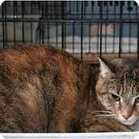 Adopt A Pet :: Tina - Kirkwood, DE