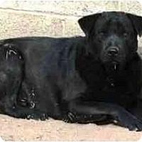 Adopt A Pet :: Lance - Gilbert, AZ