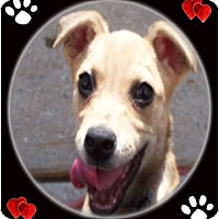 Adopt A Pet :: Cupcake - Cincinnati, OH