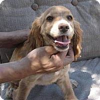 Adopt A Pet :: JR - Phoenix, AZ