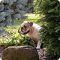 Adopt A Pet :: Bea - Strongsville, OH
