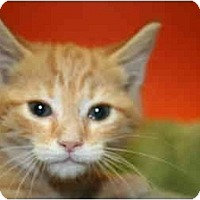 Adopt A Pet :: VALERIE - SILVER SPRING, MD