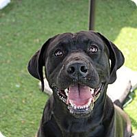 Adopt A Pet :: Platinum - Shrewsbury, NJ