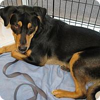 Adopt A Pet :: Brock - Phoenix, AZ
