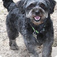 Adopt A Pet :: Juanita - Norwalk, CT
