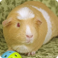 Adopt A Pet :: Miss Brunnie - Santa Barbara, CA