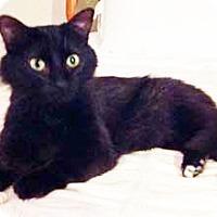 Adopt A Pet :: Wilbur - Merrifield, VA