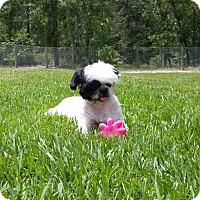 Adopt A Pet :: Sammie - Weeki Wachee, FL
