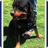 Adopt A Pet :: Billy - Rancho Cucamonga, CA