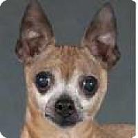 Adopt A Pet :: Liz - Chicago, IL