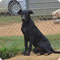 Adopt A Pet :: Jeffrey - Charlemont, MA
