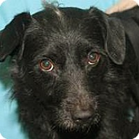 Adopt A Pet :: Onry - Mt. Prospect, IL