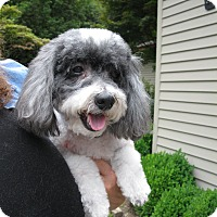 Adopt A Pet :: Shawnee - Salem, OR