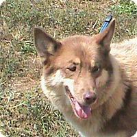 Adopt A Pet :: Eli - Maynardville, TN