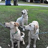 Adopt A Pet :: FORGE, MORPH & CHROME - Powder Springs, GA