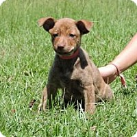Adopt A Pet :: Yazzie - Berkeley Heights, NJ