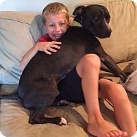 Adopt A Pet :: Brotus - Columbia, MD