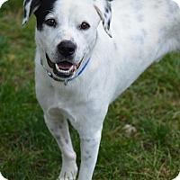 Adopt A Pet :: Gus - Cokato, MN