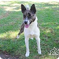 Adopt A Pet :: BATISTA - Irvine, CA