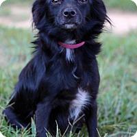 Adopt A Pet :: Senorita #5426 - Waldorf, MD