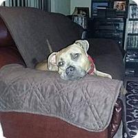 Adopt A Pet :: Silver - Grand Rapids, MI