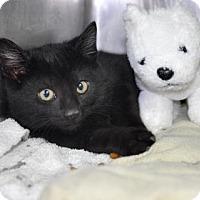 Adopt A Pet :: Cumberbund - Northbrook, IL