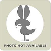 Adopt A Pet :: Silver Appleyard - Fairport, NY