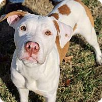 Adopt A Pet :: Evelyn - Dayton, OH