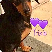 Adopt A Pet :: Trixie - Los Angeles, CA