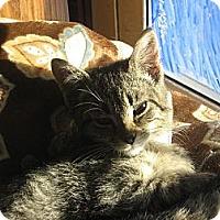 Adopt A Pet :: Jo - Norfolk, NE