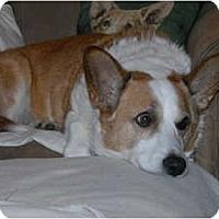 Adopt A Pet :: Gimli - Murfreesboro, TN