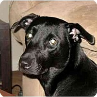 Adopt A Pet :: Squeak - Kingwood, TX