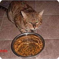 Adopt A Pet :: Aristotle - Albany, NY