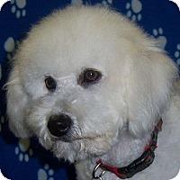 Adopt A Pet :: Evie - La Costa, CA