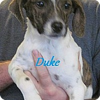 Adopt A Pet :: Duke - Linden, TN