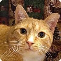 Adopt A Pet :: Cajun Cate - Albany, NY