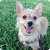 Adopt A Pet :: Kami - Ormond Beach, FL