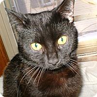 Adopt A Pet :: Ambrosia - Milwaukee, WI