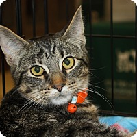 Adopt A Pet :: West (MP) - Little Falls, NJ
