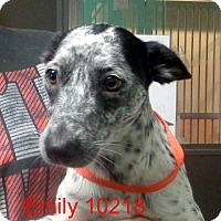 Adopt A Pet :: Emily - baltimore, MD