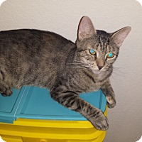 Adopt A Pet :: Hope - Mesa, AZ