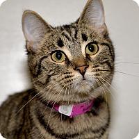 Adopt A Pet :: Tina - Medina, OH
