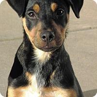Adopt A Pet :: Rascal - Germantown, MD
