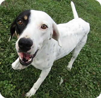 Hound (Unknown Type) Mix Dog for adoption in Sarasota, Florida - Fifi