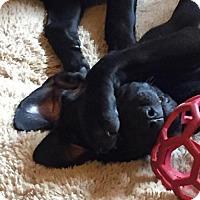 Adopt A Pet :: Humble - Denton, TX