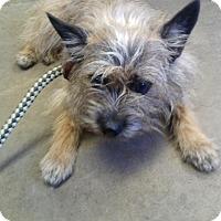 Adopt A Pet :: KIKI - Cadiz, OH